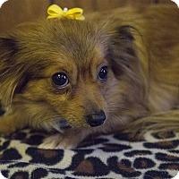 Adopt A Pet :: Kady - Tavares, FL
