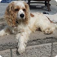 Adopt A Pet :: Chester - Santa Barbara, CA