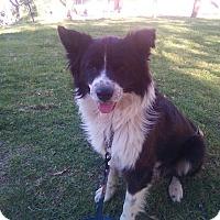 Adopt A Pet :: Kito - San Diego, CA
