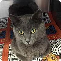 Adopt A Pet :: Wolf - Colorado Springs, CO