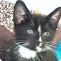 Adopt A Pet :: Skye - Brooklyn, NY