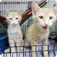 Adopt A Pet :: Pecan - Milwaukee, WI