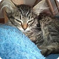 Adopt A Pet :: Taurus - Grand Rapids, MI