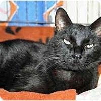 Adopt A Pet :: Twilight - Racine, WI