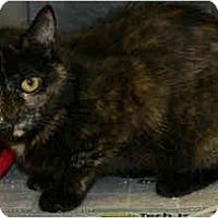 Adopt A Pet :: Jasmine - Greenville, SC