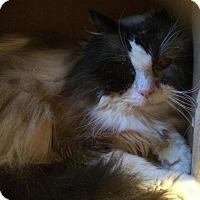 Adopt A Pet :: Coda - Edmonton, AB