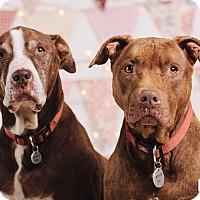 Adopt A Pet :: Grandma Callie & Grandpa Scrap - Portland, OR