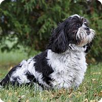 Adopt A Pet :: CODI - Ile-Perrot, QC