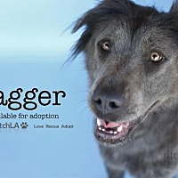 Adopt A Pet :: Jagger - Castaic, CA