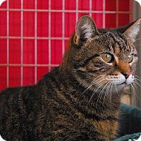 Adopt A Pet :: Meow - Winchendon, MA