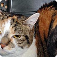 Adopt A Pet :: Samantha - Wildomar, CA