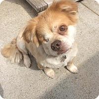Adopt A Pet :: MURPHY - Pacific Palisades, CA