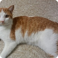 Adopt A Pet :: Danny Boy - Medina, OH
