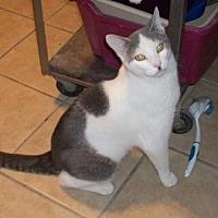 Adopt A Pet :: Nizzy - Lacon, IL