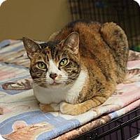 Adopt A Pet :: Midge - Ocean City, NJ