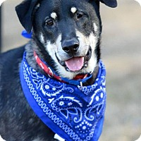 Adopt A Pet :: Tyster - Westminster, MD