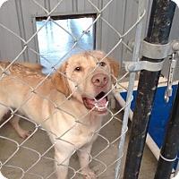 Adopt A Pet :: Ranger - Williston, FL