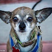 Adopt A Pet :: Tiki - Tucson, AZ
