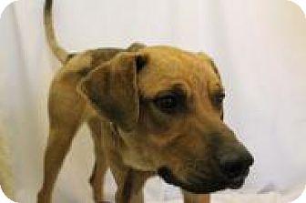 Shepherd (Unknown Type) Mix Dog for adoption in Huachuca City, Arizona - Rebel