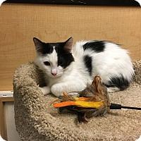 Adopt A Pet :: Chanel - Riverside, CA