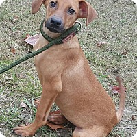 Adopt A Pet :: Oliver - Livingston, TX