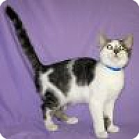 Adopt A Pet :: Takoda - Powell, OH