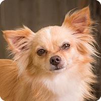 Adopt A Pet :: Dot - League City, TX