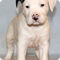 Adopt A Pet :: Jim Beam - Waldorf, MD
