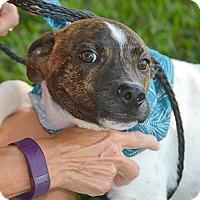 Adopt A Pet :: Pal - San Leon, TX