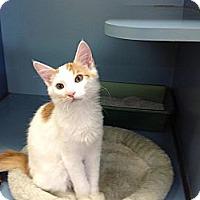 Adopt A Pet :: Crookshanks - Lake Charles, LA