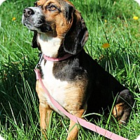 Adopt A Pet :: Sophie - Bridgewater, NJ