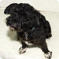 Adopt A Pet :: Maddie - Cumberland, MD