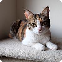 Adopt A Pet :: Becka - Brooklyn, NY