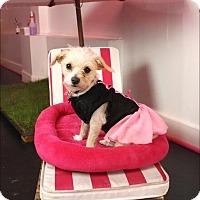 Adopt A Pet :: Chelsea - West LA, CA