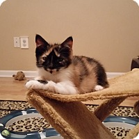 Adopt A Pet :: Elly Mae - Turnersville, NJ