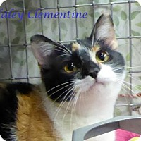 Adopt A Pet :: Haley Clementine - Kansas City, MO