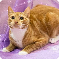 Adopt A Pet :: Spitfire - Oviedo, FL