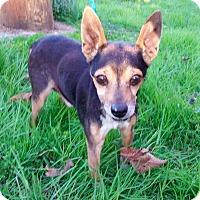 Adopt A Pet :: Paul - New York, NY