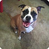 Adopt A Pet :: Roberts(Robbie) - Avon, OH