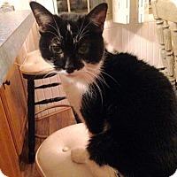 Adopt A Pet :: Sasha - South Haven, MI
