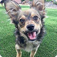 Adopt A Pet :: Jersey - Santa Ana, CA
