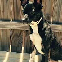 Adopt A Pet :: Scooter - Del Rio, TX