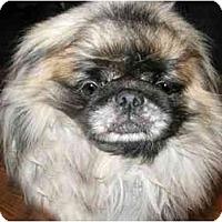 Adopt A Pet :: Buster - Mays Landing, NJ