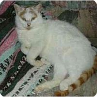 Adopt A Pet :: Ivan - New Port Richey, FL