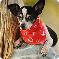Adopt A Pet :: Charlie - perfect dog! - Los Angeles, CA