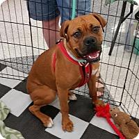 Adopt A Pet :: Macie - Phoenix, AZ