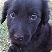 Adopt A Pet :: Tia - Las Cruces, NM
