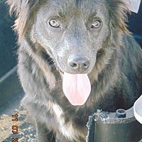 Adopt A Pet :: Rockie - San Diego, CA