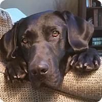 Adopt A Pet :: Rio - Denton, TX