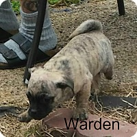 Adopt A Pet :: Warden - House Springs, MO